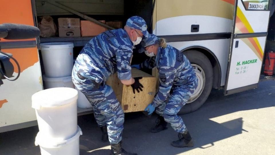 Челябинский ветеринар Карен Даллакян приютит спасенного от живодеров львенка Грома