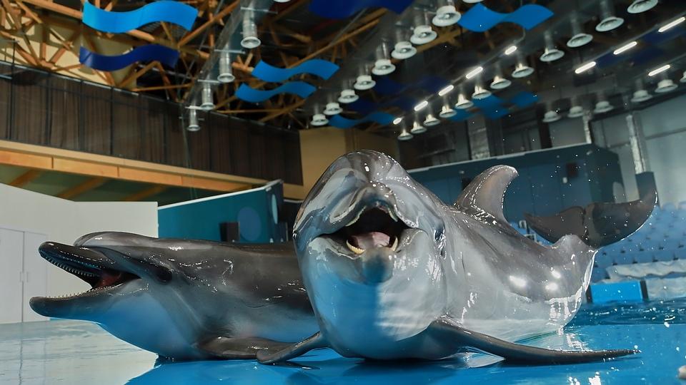 Появилось видео с новорожденным в океанариуме Екатеринбурга дельфинёнком