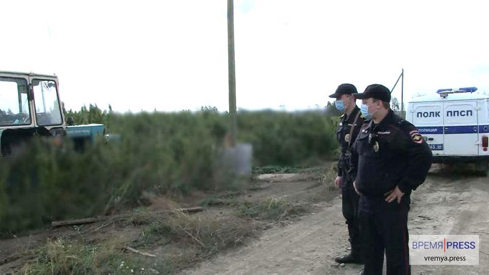 Вдоль Сибирского тракта полицейские уничтожили поле конопли