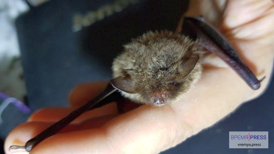 Житель Каменска-Уральского спас летучего мышонка, сломавшего крылья