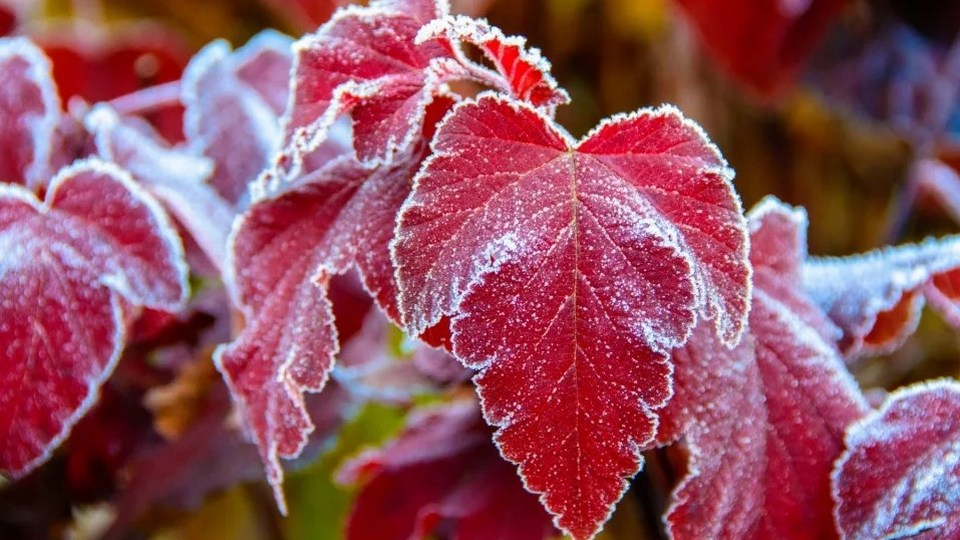 В российские регионы придет похолодание до -15 градусов