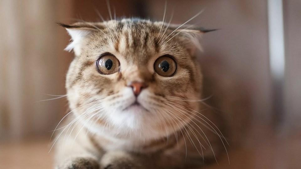 Названы главные страхи домашних кошек
