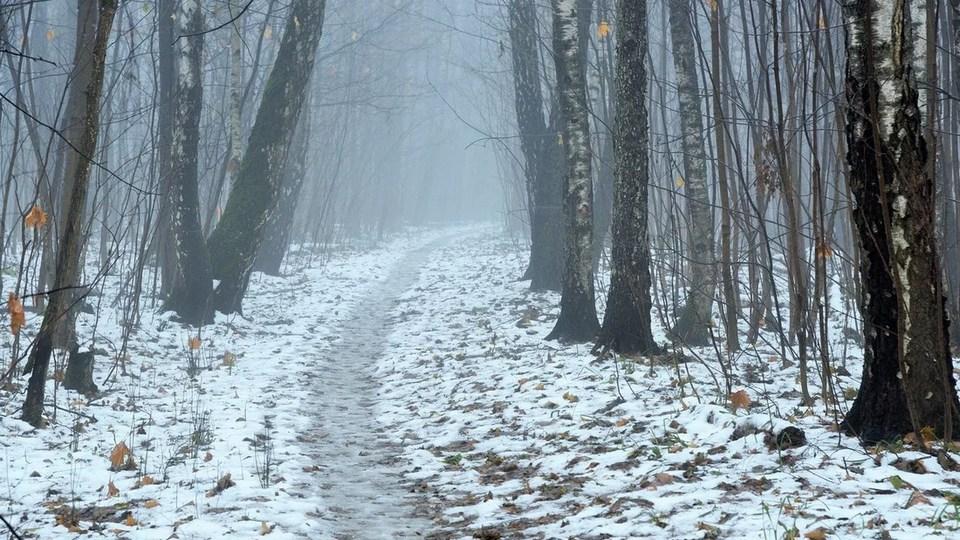 Снег в Свердловской области выпадет на новой неделе