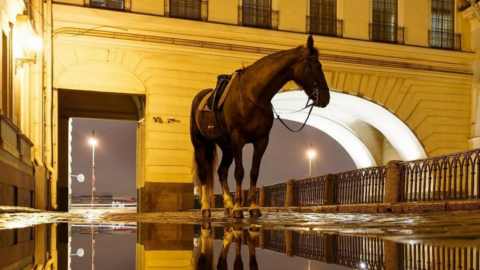 Житель Петербурга хотел поцеловать лошадь и остался без носа
