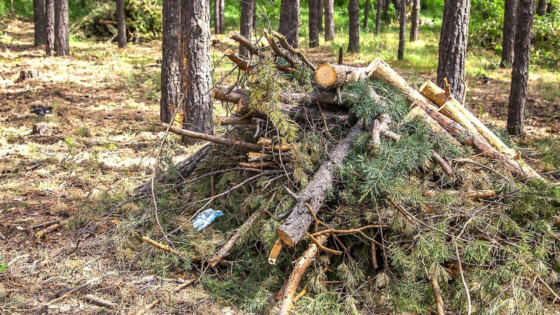 С 1 января изменились правила санитарной безопасности в лесах