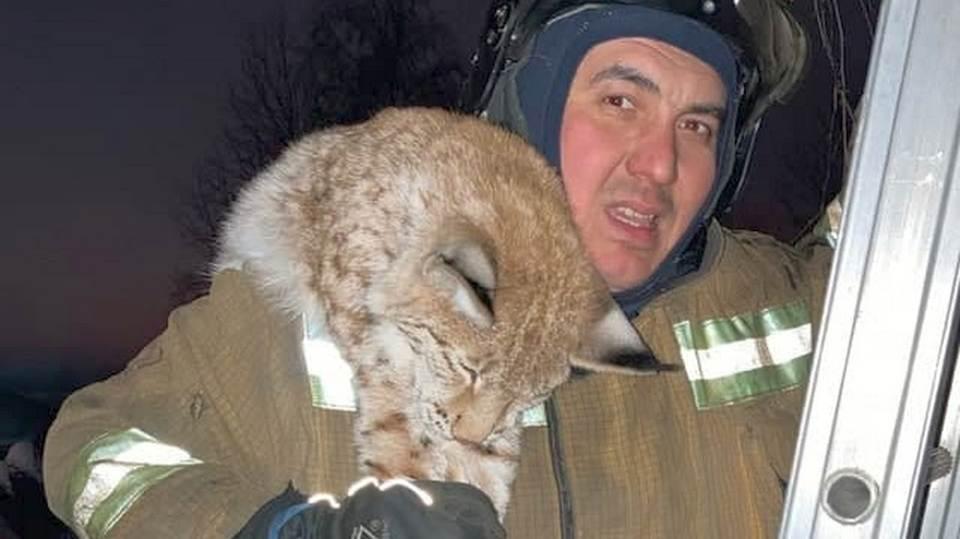 Спасатели поймали рысь, испугавшую жителей Ленобласти