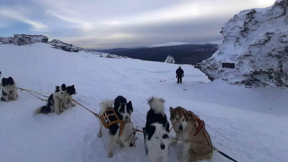 Пермяк покорил перевал Дятлова на собачьей упряжке в 40-градусный мороз