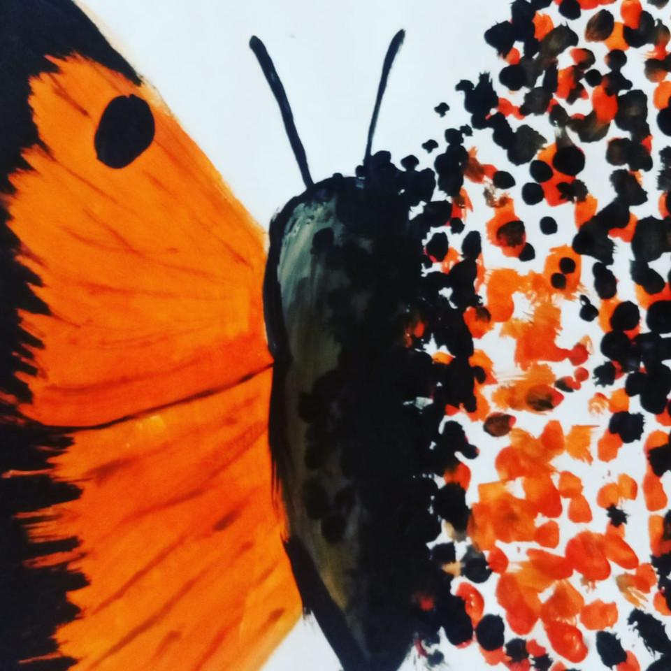 Бабочки бывают разные.