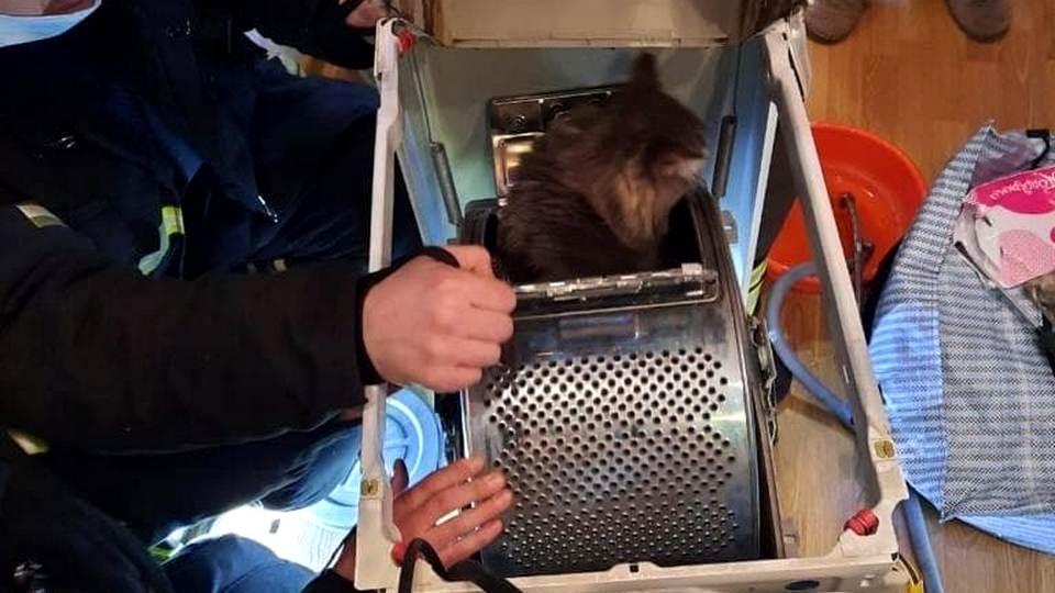Московские спасатели достали кошку из стиральной машины