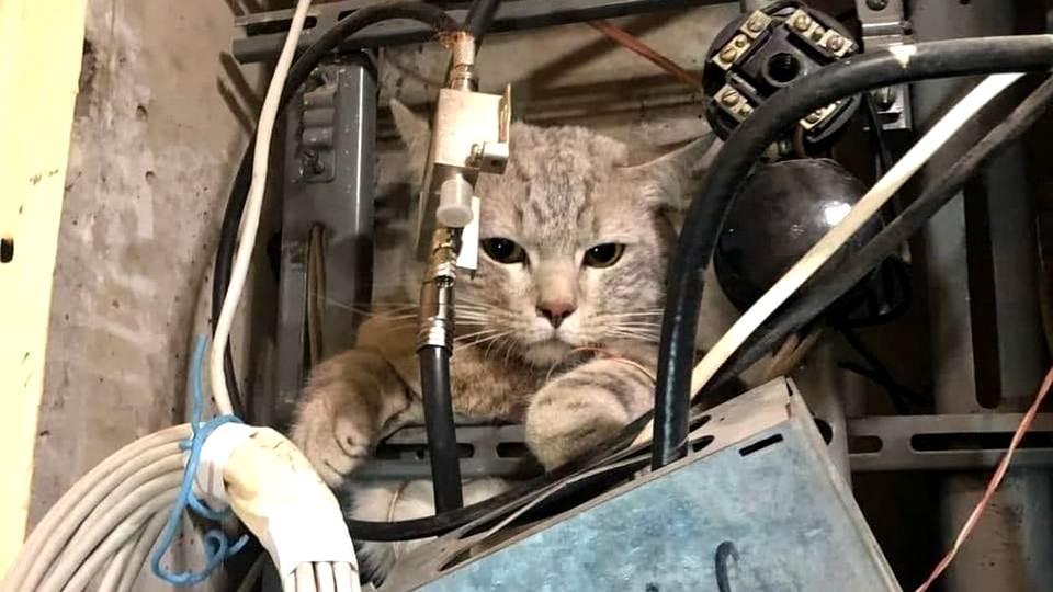 Потерявшийся кот оставил без ТВ и интернета целый подъезд