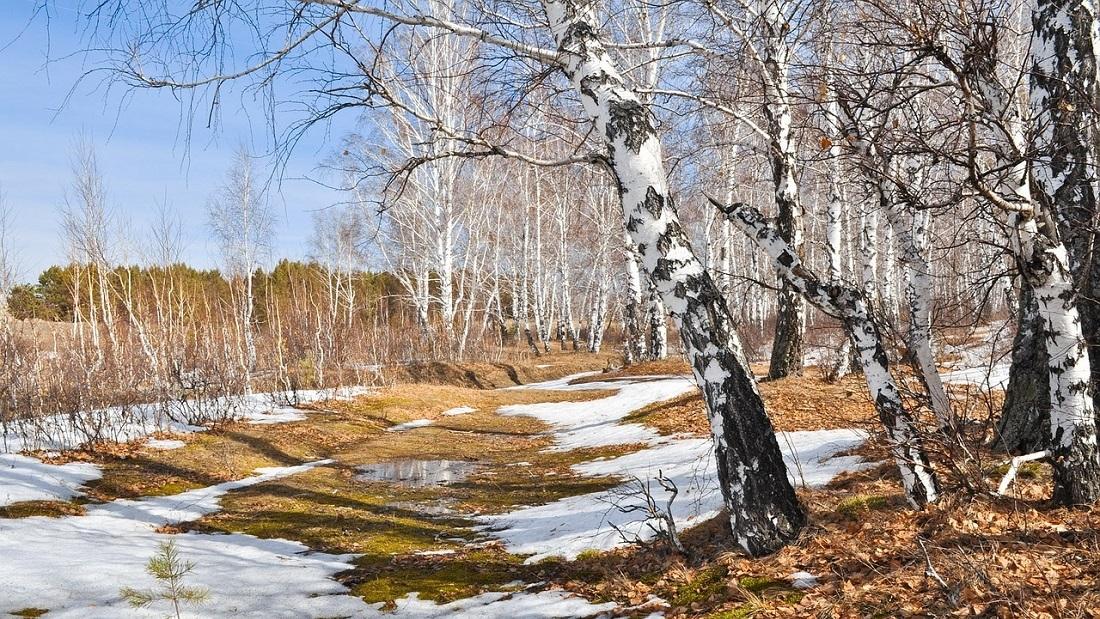 К середине апреля в Свердловской области потеплеет до +18ºС