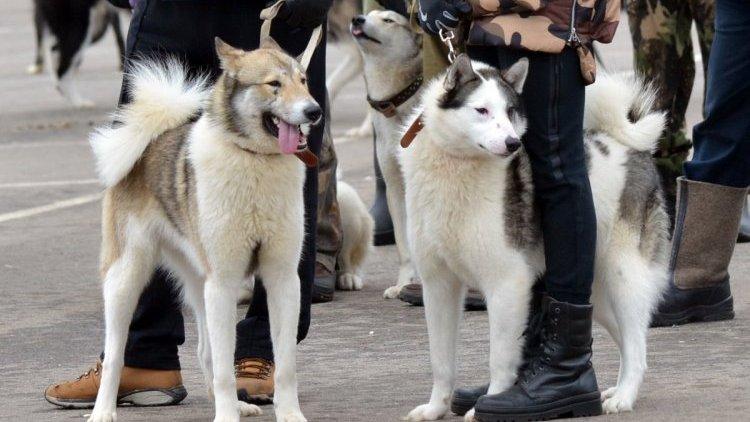 Выставка собак охотничьих пород пройдёт в Каменске-Уральском