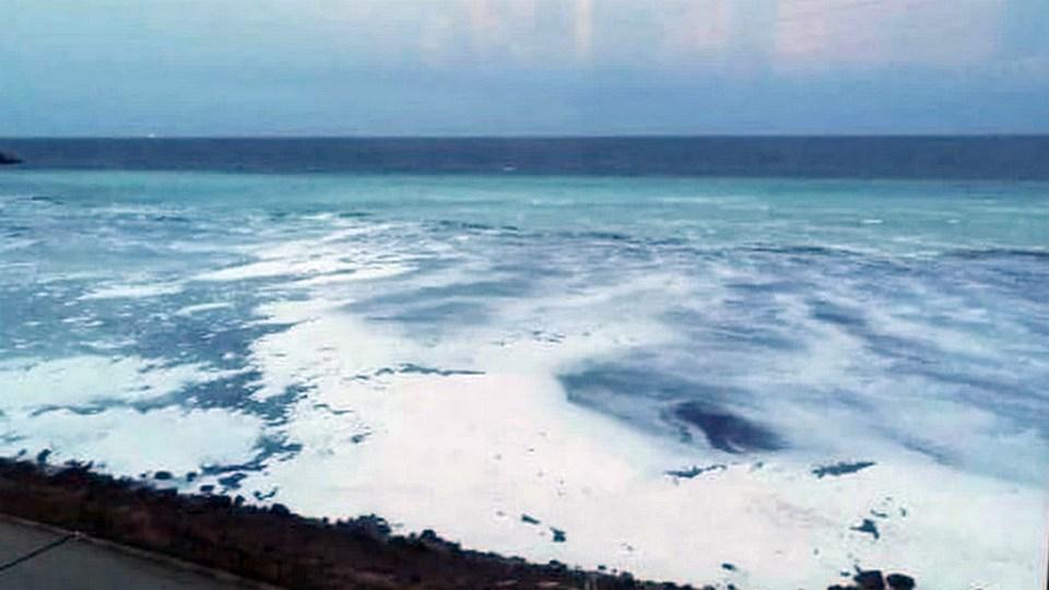 На побережье Сахалина массово выбросило сельдь