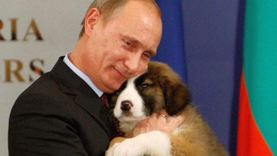 Закон о ведении учета домашних животных появится в России