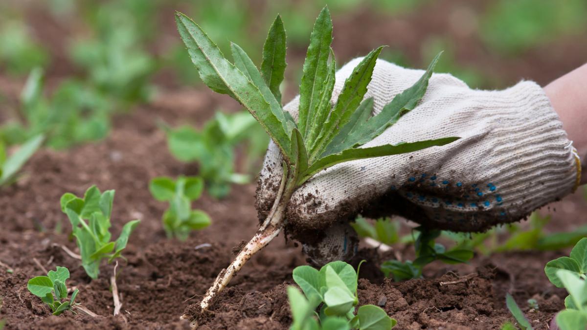 В России дачников не будут штрафовать за сорняки на участках