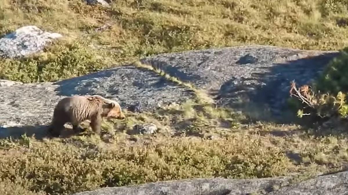 В Краснодарском крае медведь напал на группу туристов, погиб 16-летний подросток