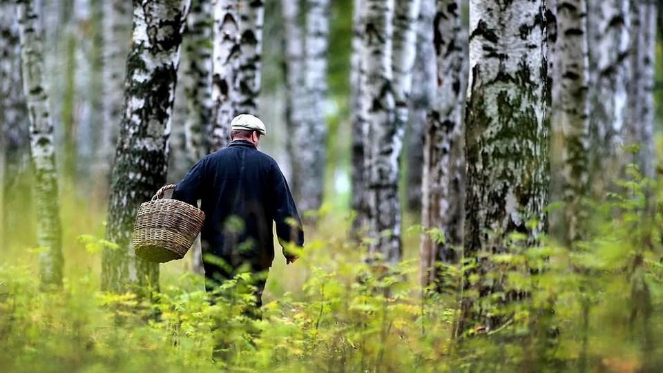 Четыре человека погибли в лесах Свердловской области с начала 2021 года