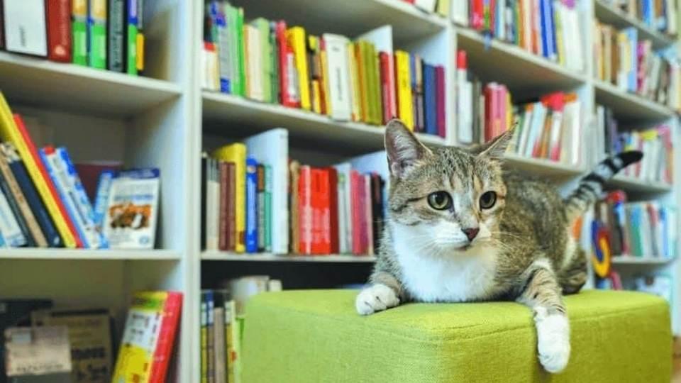 России определена лучшая служебная кошка