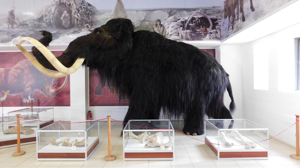 """Вакцина-мамонцина"": в воронежском музее объяснили, зачем поставили прививку ископаемому мамонту"