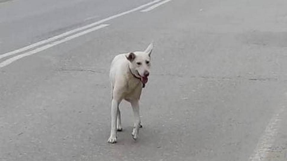 На Урале собака больше суток ждала хозяина на месте, где его арестовали