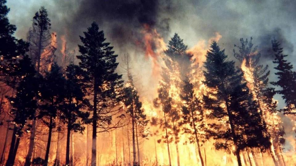 Площадь природных пожаров в Челябинской области превысила 14 тыс. гектаров