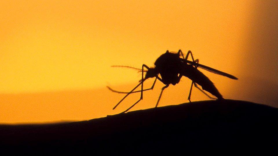 Осенью в России могут появиться комары - переносчики лихорадки