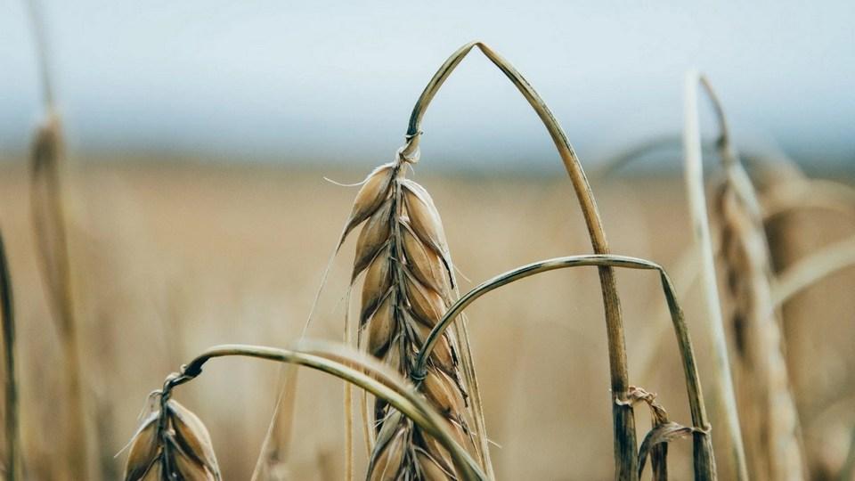 Свердловская область из-за засухи потеряла не менее 2 млрд рублей
