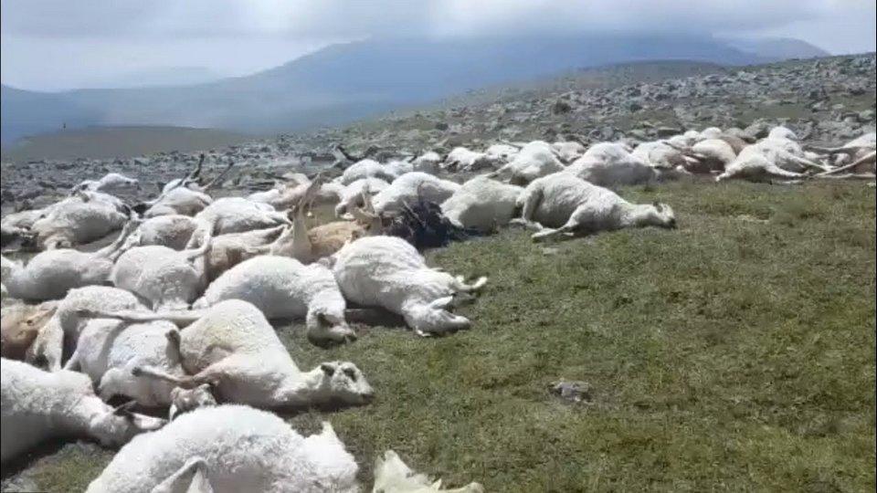 В Грузии молния убила более 500 овец