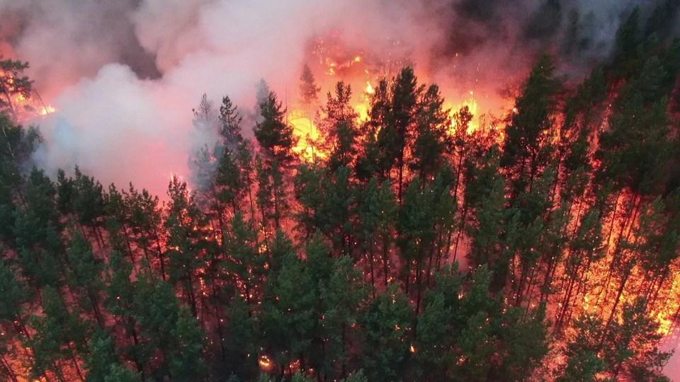 Более 80% лесных пожаров в Свердловской области устроили люди