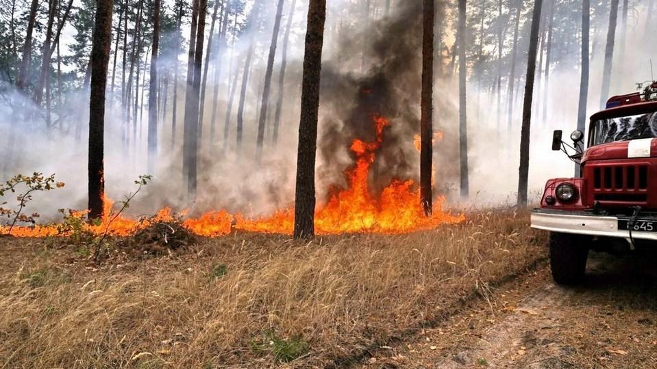 Волонтеры нашли газовые баллончики на месте природного пожара под Екатеринбургом