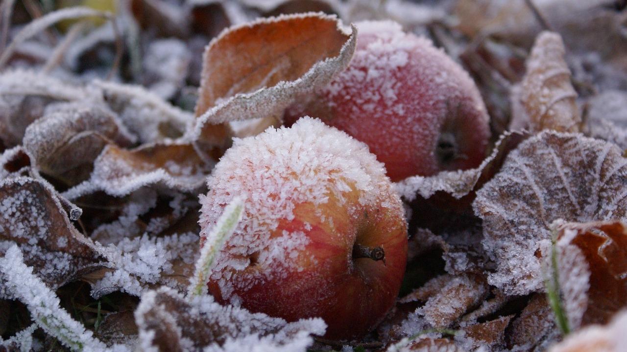 В Свердловской области ожидаются заморозки до -3 °C